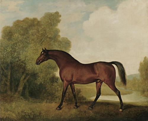 Art Prints of Ambrosio, a Bay Stallion by George Stubbs