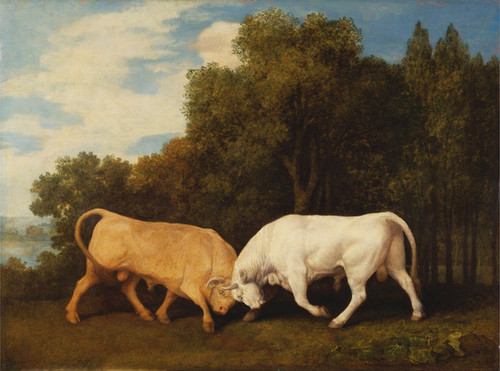 Art Prints of Bulls Fighting by George Stubbs