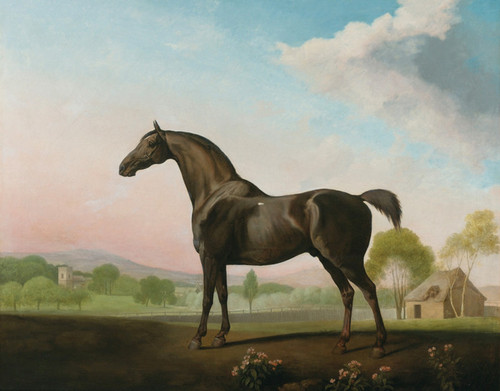 Art Prints of Lord Grosvenor's Sweet William in a Landscape by George Stubbs