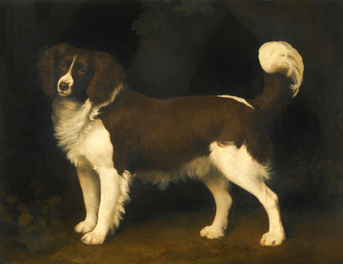 Art Prints of Portrait of a Brown and White Newfoundland Spaniel by George Stubbs