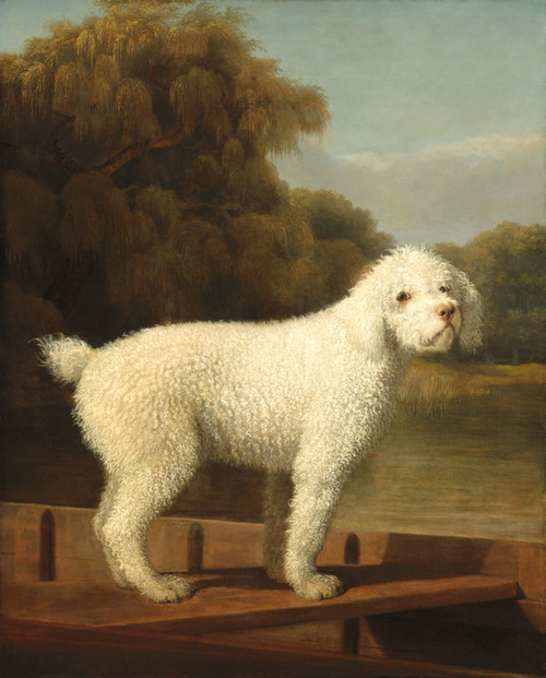 Art Prints of White Poodle in a Punt by George Stubbs