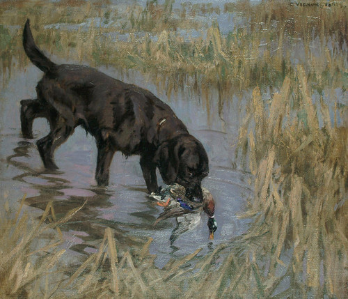 Art Prints of Black Retriever and Mallard by George Vernon Stokes