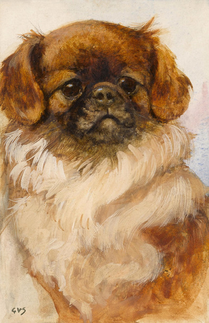 Art Prints of Portrait of a Pekingese by George Vernon Stokes
