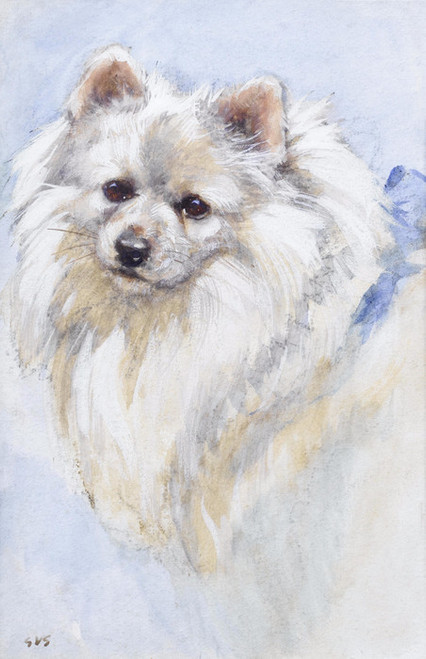Art Prints of Portrait of a Japanese Spitz by George Vernon Stokes
