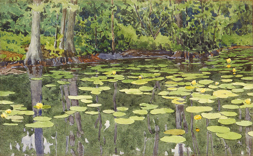 Art Prints of Water Lily Pond by Gunnar Widforss