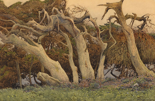 Art Prints of Windswept Trees by Gunnar Widforss