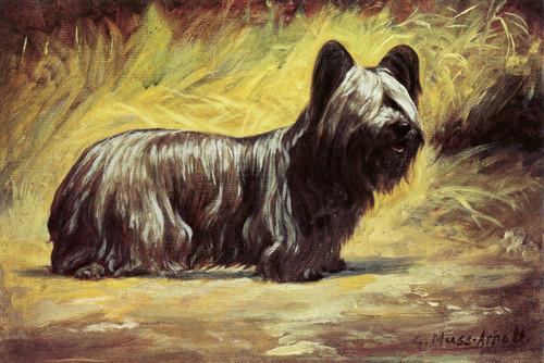 Art Prints of Skye Terrier in a Landscape by Gustav Muss-Arnolt