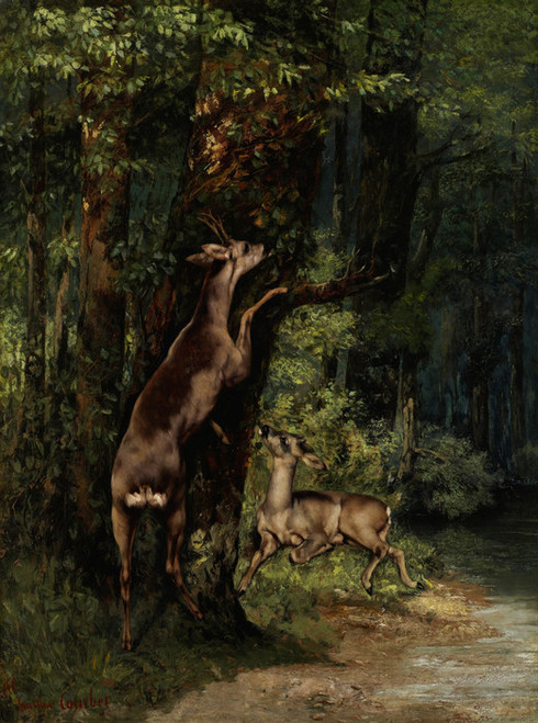 Art Prints of Deer in a Forest by Gustave Courbet