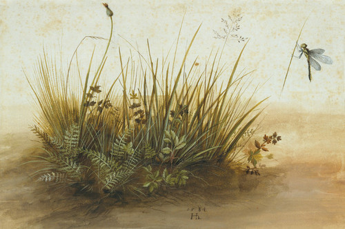 Art Prints of A Small Piece of Turf 1584 by Hans Hoffmann
