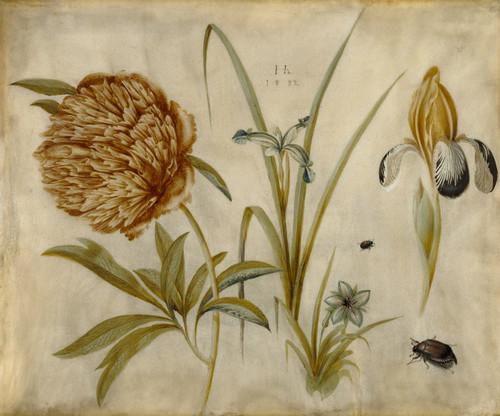 Art Prints of Flowers and Beetles by Hans Hoffmann