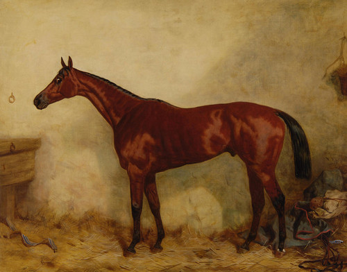 Art Prints of Robert Devil in a Stable by Harry Hall