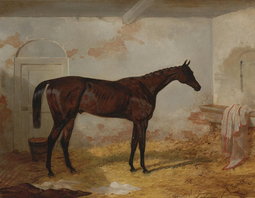 Art Prints of Bay Colt Sweetmeat by Harry Hall
