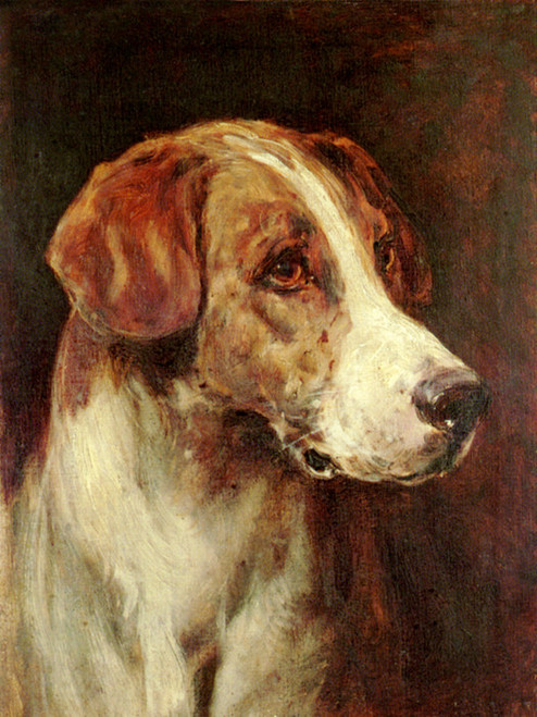 Art Prints of Study of the Head of a Hound by Heywood Hardy
