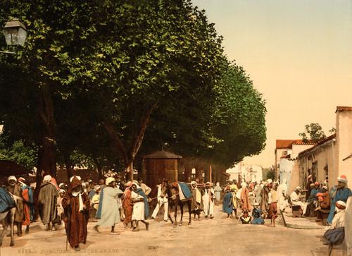 Art Prints of Arab Market, Blidah, Algeria (387115)