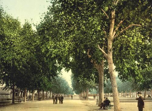 Art Prints of The Promenade, Montpelier, France (387377)