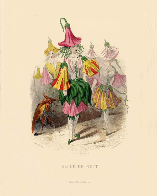 Art Prints of Belle de Nuit by J. J. Grandville