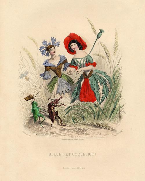 Art Prints of Annual Bluebottle and Corn Poppy by J. J. Grandville