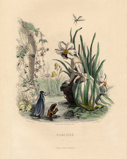 Art Prints of Daffodil, Narcissus by J. J. Grandville