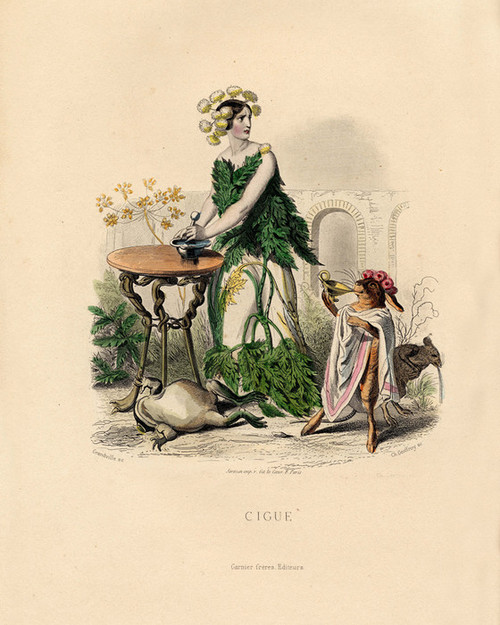 Art Prints of Hemlock by J. J. Grandville