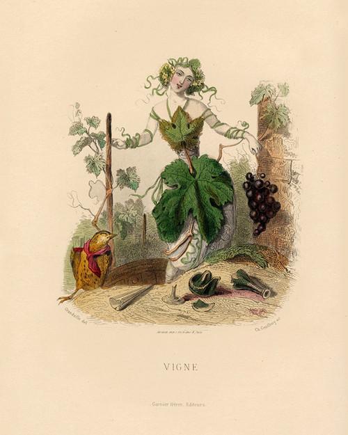 Art Prints of Grape Vine by J. J. Grandville