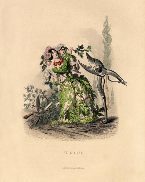 Art Prints of Hawthorn by J. J. Grandville