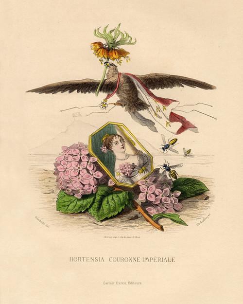 Art Prints of Hydrangea by J. J. Grandville
