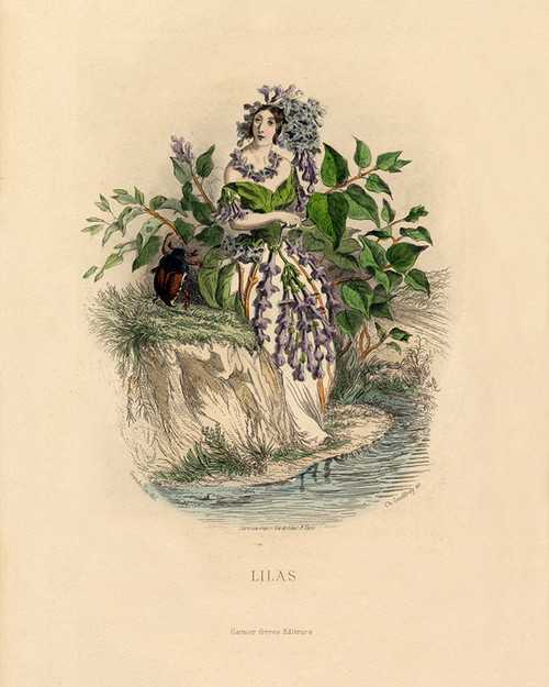 Art Prints of Lilacs by J. J. Grandville