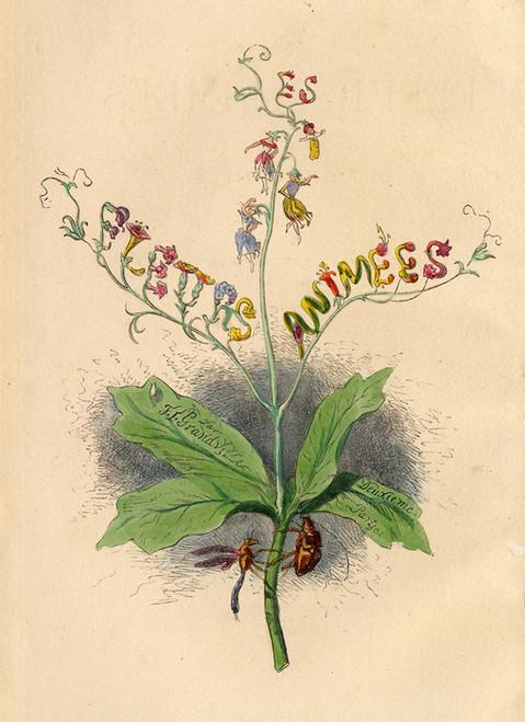 Art Prints of Les Fleurs Animees by J. J. Grandville