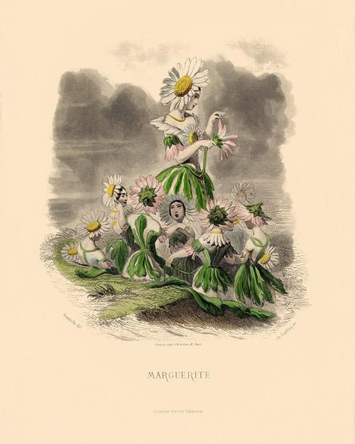 Art Prints of Marguerite Daisy by J. J. Grandville