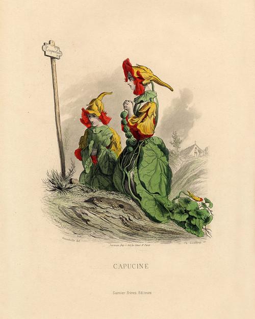 Art Prints of Nasturtium by J. J. Grandville