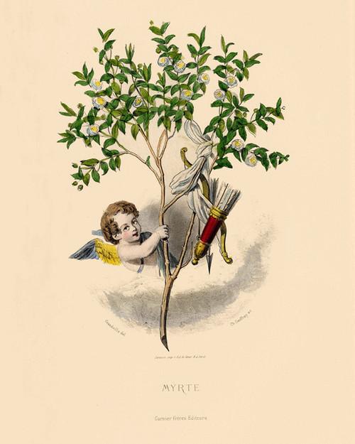Art Prints of Myrtle by J. J. Grandville
