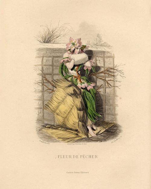 Art Prints of Peach Blossom by J. J. Grandville
