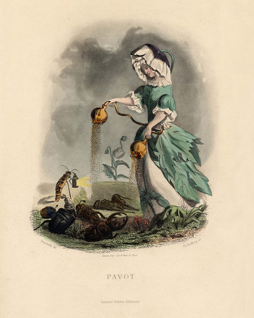 Art Prints of Poppy by J. J. Grandville