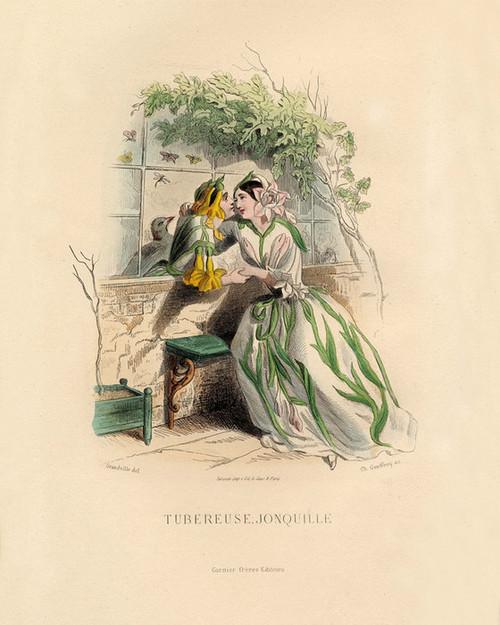 Art Prints of Tuberose and Jonquil by J. J. Grandville