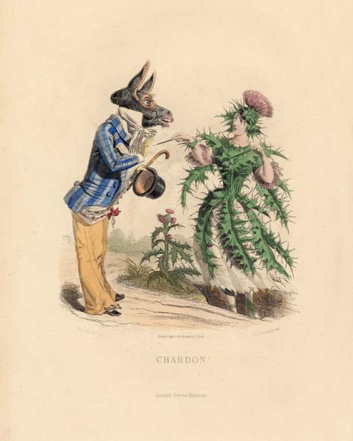 Art Prints of Thistle by J. J. Grandville