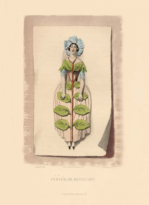 Art Prints of Periwinkle by J. J. Grandville