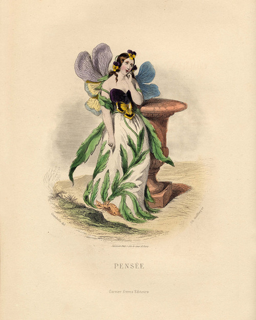 Art Prints of Pansy by J. J. Grandville