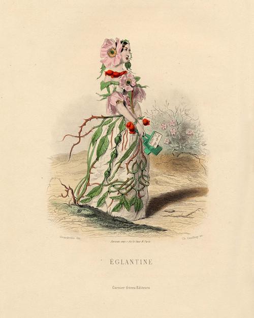 Art Prints of Wild Rose by J. J. Grandville