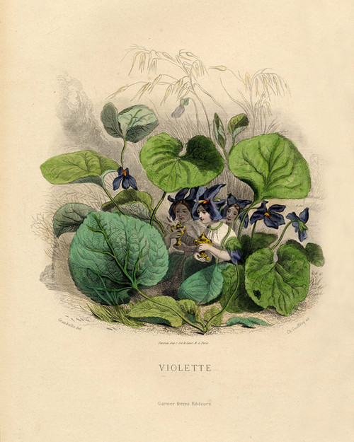Art Prints of Violet by J. J. Grandville