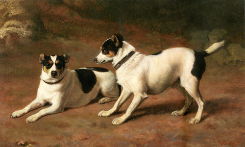 Art Prints of Two Fox Terriers by Jacques-Laurent Agasse
