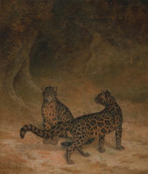Art Prints of Clouded Leopards by Jacques-Laurent Agasse