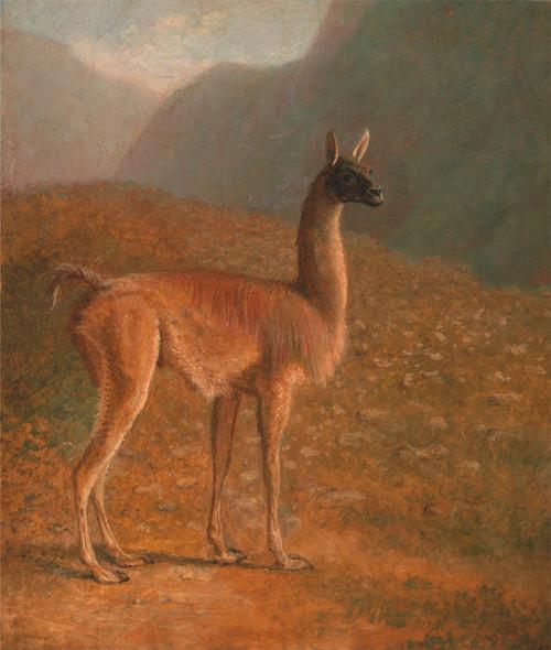 Art Prints of Guanaco by Jacques-Laurent Agasse