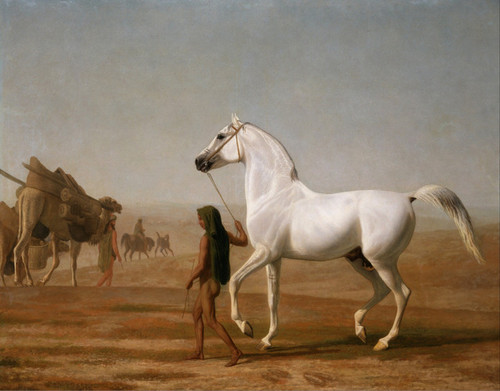 Art Prints of Wellesley Grey Arabian in the Desert by Jacques-Laurent Agasse