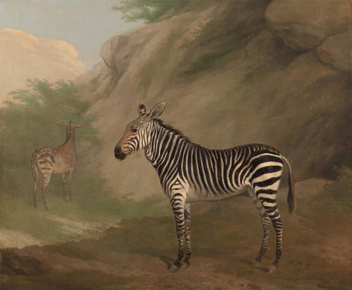 Art Prints of Zebra by Jacques-Laurent Agasse