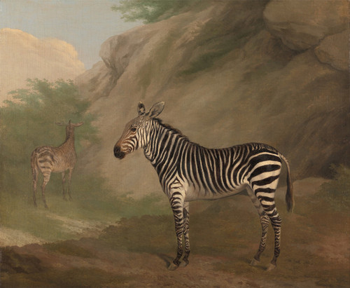 Art Prints of Zebra by Jacques-Laurent Agasse