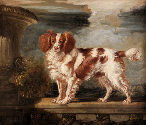 Art Prints of Portrait of Dash, a Favorite Spaniel by James Ward