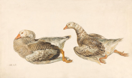 Art Prints of Studies of Geese by James Ward