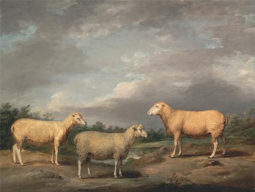 Art Prints of Ryelands Sheep, the King's Ram and Ewe by James Ward