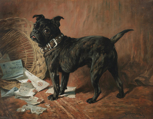Art Prints of A Naughty Black Pug by John Emms