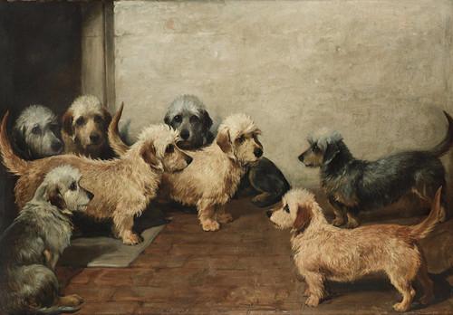 Art Prints of Eight Dandie Dinmonts by John Emms
